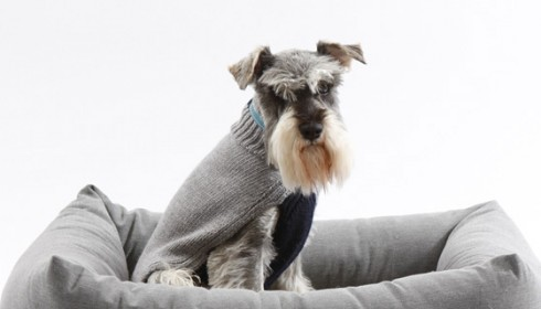 Mungo_Maud_pets_dogs_toys_beds_clothing_style_8